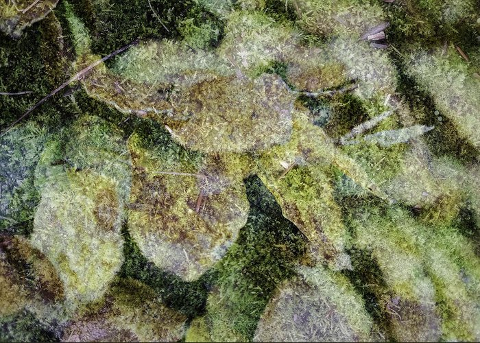 Abstract Greeting Card featuring the photograph Leaves And Moss by Wendy Chapman