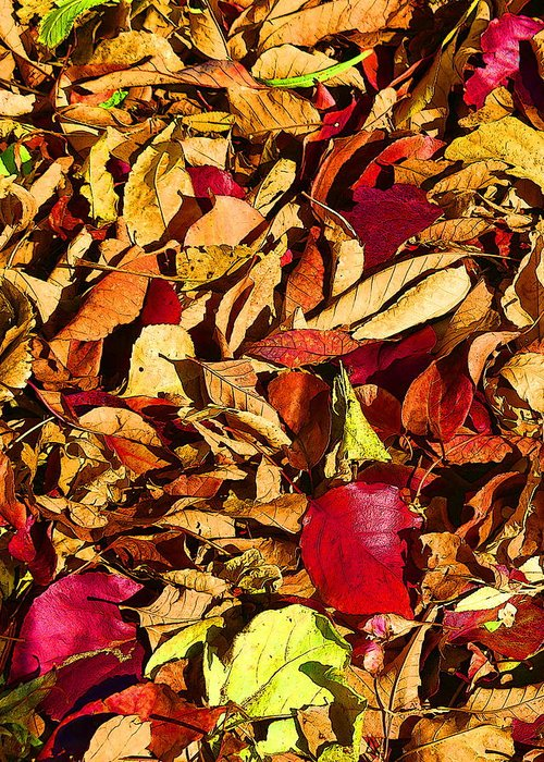 Nature Greeting Card featuring the photograph Leaves Of Autumn by David Wimsatt