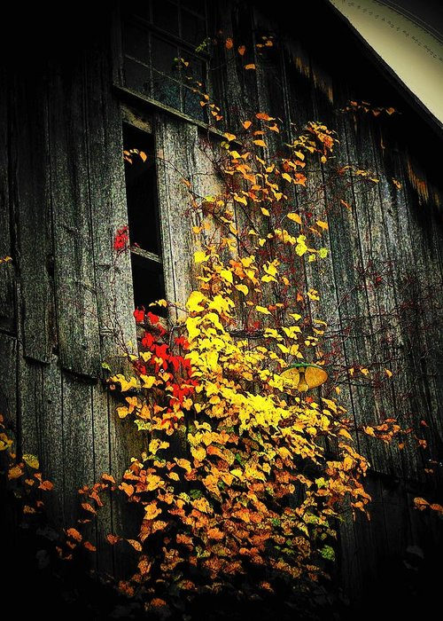 Barn Greeting Card featuring the photograph Leaves On An Old Barn by Joyce Kimble Smith