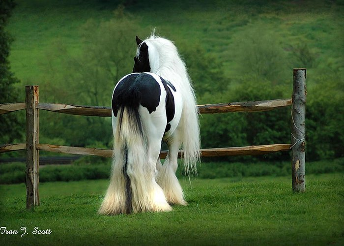Gypsy Stallion Greeting Card featuring the photograph Lenny by Fran J Scott