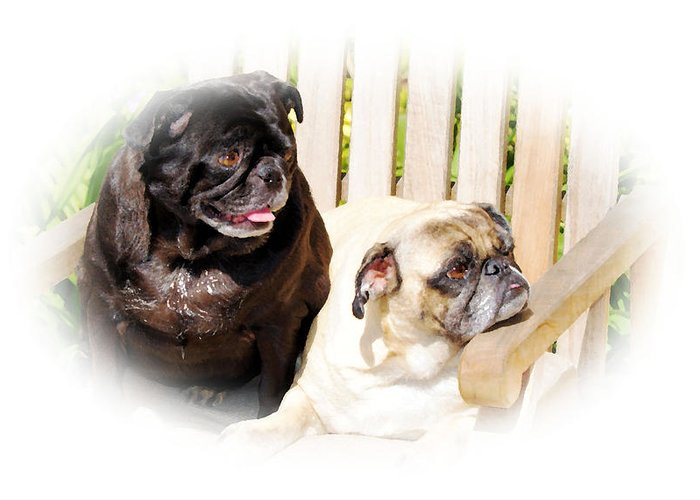Dog Greeting Card featuring the photograph Leroy And Mrs. Jones by Ellen Lerner ODonnell
