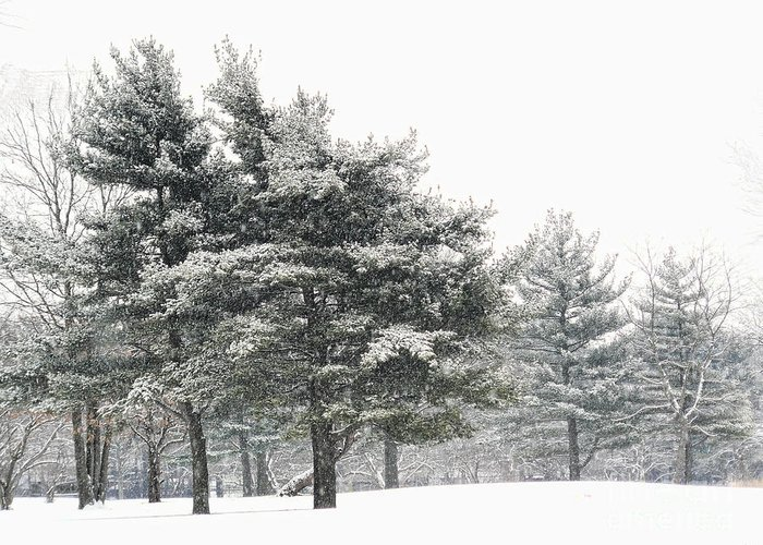 Trees Greeting Card featuring the photograph Let It Snow by Jeff Breiman