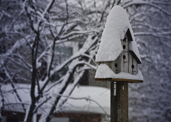 Snow Greeting Card featuring the photograph Let It Snow by Teresa Mucha