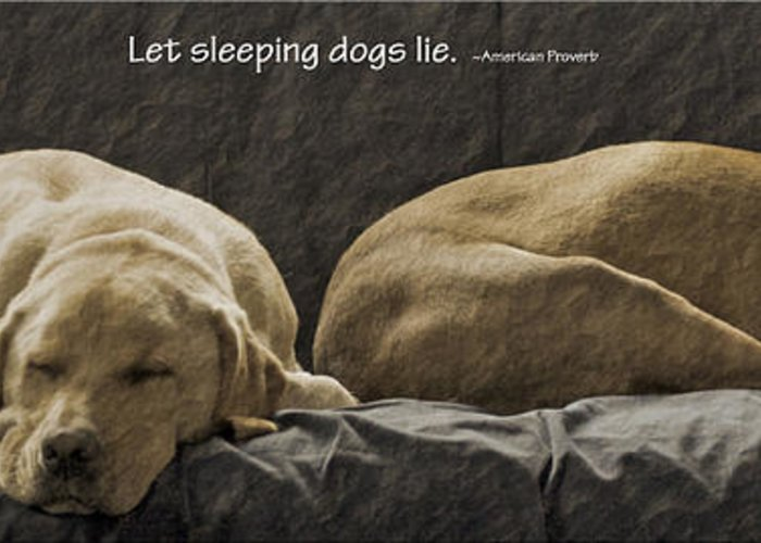 Sleeping Dogs Greeting Card featuring the photograph Let Sleeping Dogs Lie by Gwyn Newcombe