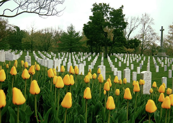 Arlington Greeting Card featuring the photograph Life And Death At Arlington by Jame Hayes