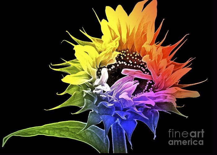 Sunflower Greeting Card featuring the photograph Life Is Like A Rainbow ... by Gwyn Newcombe
