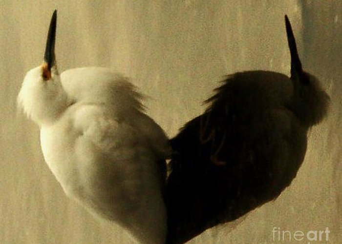 Hearts Greeting Card featuring the photograph Light And Shadow by Daniele Smith