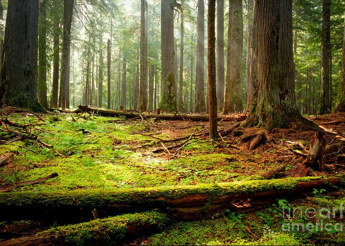 Forest Greeting Card featuring the photograph Light In The Forest by Idaho Scenic Images Linda Lantzy