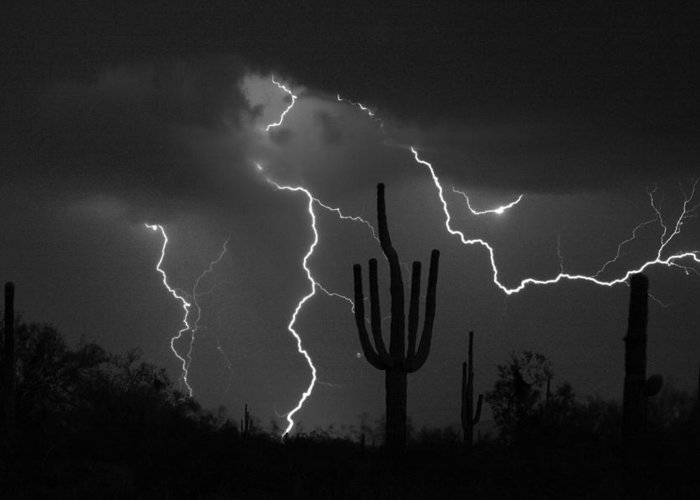 Saguaro Greeting Card featuring the photograph Lightning Storm Saguaro Fine Art Bw Photography by James BO Insogna