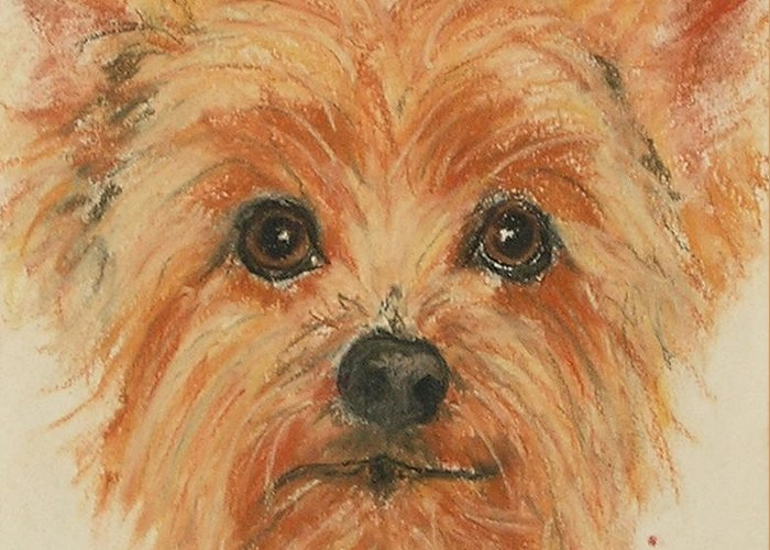 Pastel Greeting Card featuring the drawing Lil Rascal by Cori Solomon