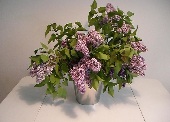Lilacs Greeting Card featuring the photograph Lilacs by Nancy Ferrier