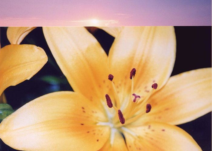 Nature Greeting Card featuring the photograph Lilies And Sky 3 by Lyle Crump