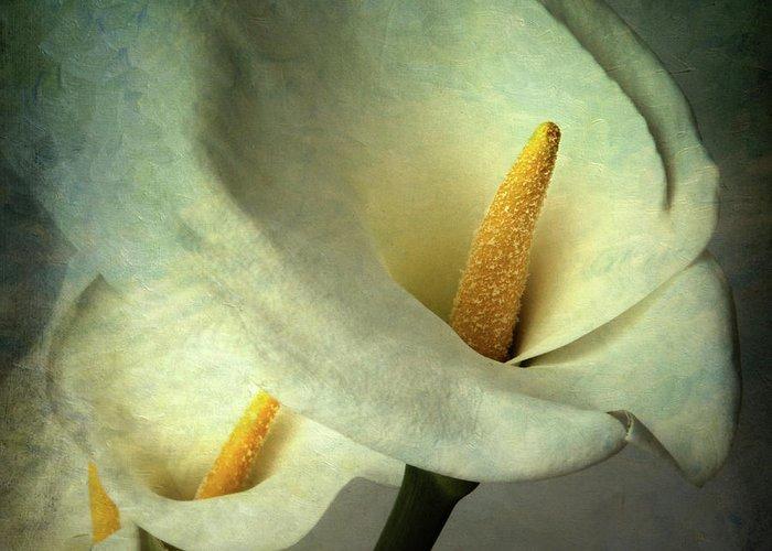 Arum Lily Greeting Card featuring the photograph Lillies by Bernard Jaubert