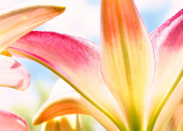 Flower Greeting Card featuring the photograph Lily And Clouds by Steve Augustin