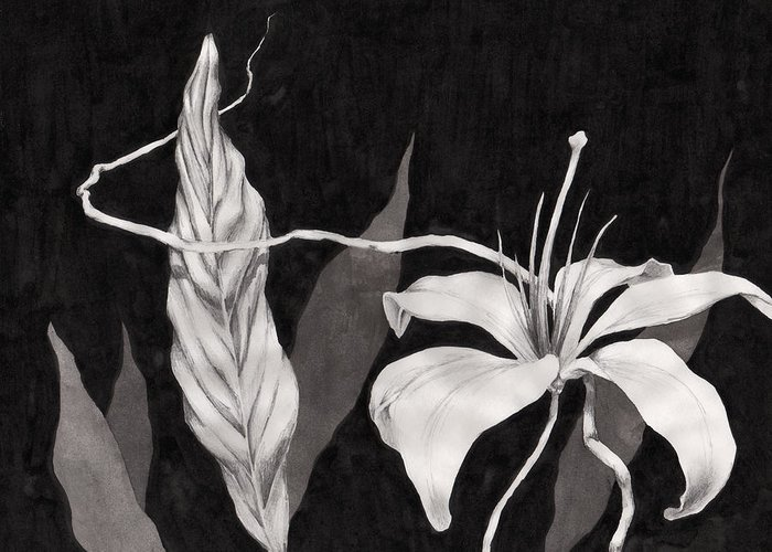 Ink Painting Greeting Card featuring the drawing Lily In The Night by Jennifer McDuffie