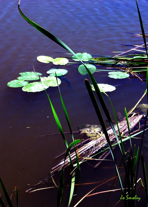 Reeds And Lily Pads Greeting Card featuring the photograph Lily Pads And Reeds by Joanne Smoley