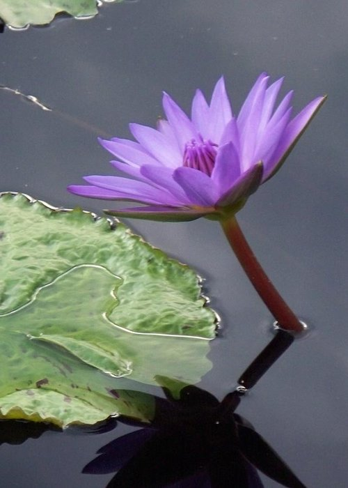 Photograph Greeting Card featuring the photograph Lily Pond by Eric Schiabor