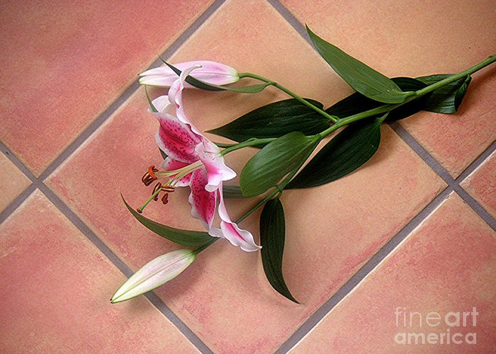 Nature Greeting Card featuring the photograph Lily Stem On Tile by Lucyna A M Green
