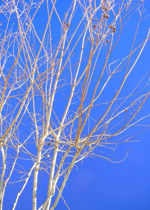 Crape Myrtle Limbs Greeting Card featuring the photograph Lines Of Nature by Warren Thompson