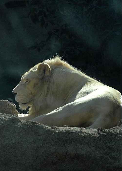 Zoo Greeting Card featuring the photograph Lion 15 by Joyce StJames