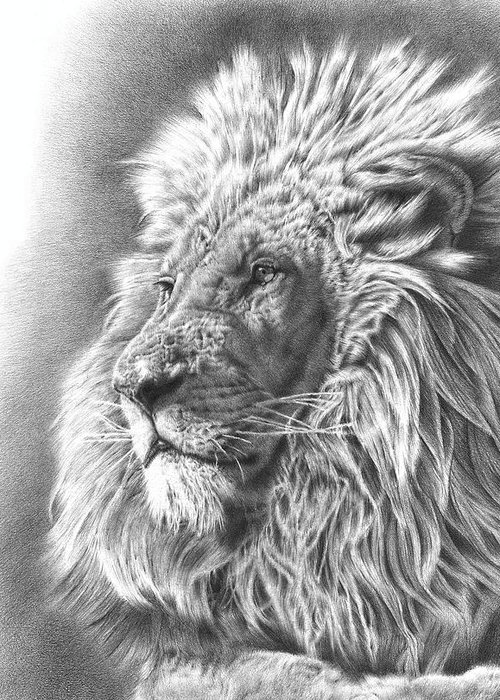 Pencil Drawings Greeting Cards