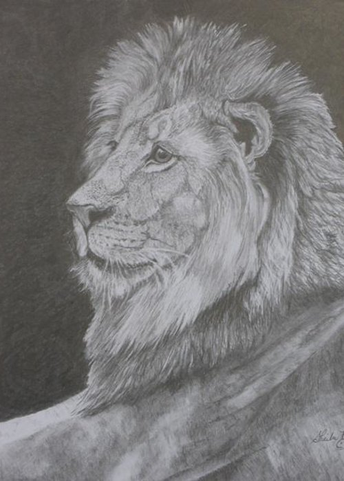 Lion Greeting Card featuring the drawing Lion Portrait by Sheila Banga