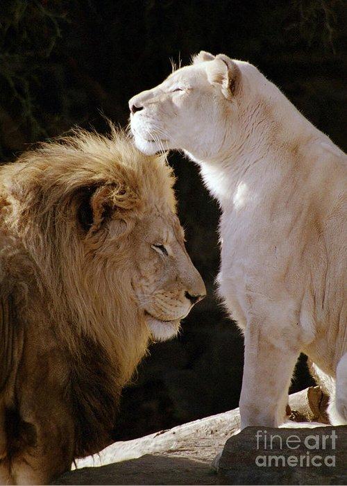 Lion Greeting Card featuring the photograph Lion Yin Yang by Rose De Dan