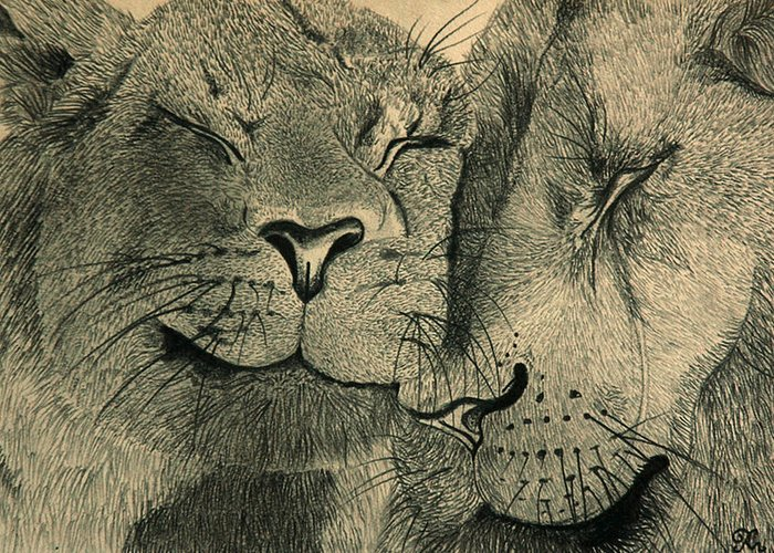 African Anger Angry Animal Anticipating Anticipation Attentive Blijdorp Brown Carnivore Cat Cats Couple Duo Family Fight Lion Lioness Lions Love Pair Pride Sibling Siblings Wild Wiskers Zoo Greeting Card featuring the drawing Lions In Love by Ramneek Narang