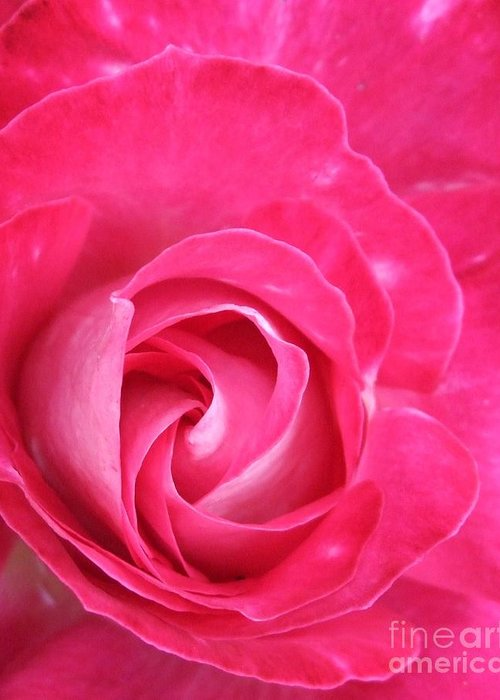 Pink Greeting Card featuring the photograph Lipstick Pink Rose by Deborah Brewer