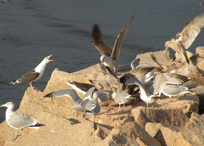 Birds Greeting Card featuring the photograph Listen Up Gulls by Donald Cameron
