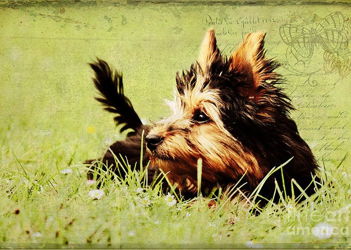 Dog Greeting Card featuring the photograph Little Dog by Angela Doelling AD DESIGN Photo and PhotoArt