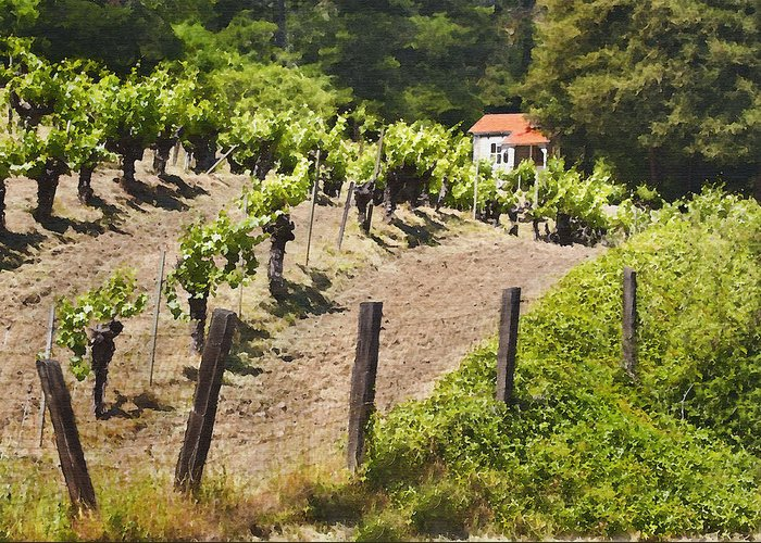 Vineyard Greeting Card featuring the photograph Little White House by Sharon Foster