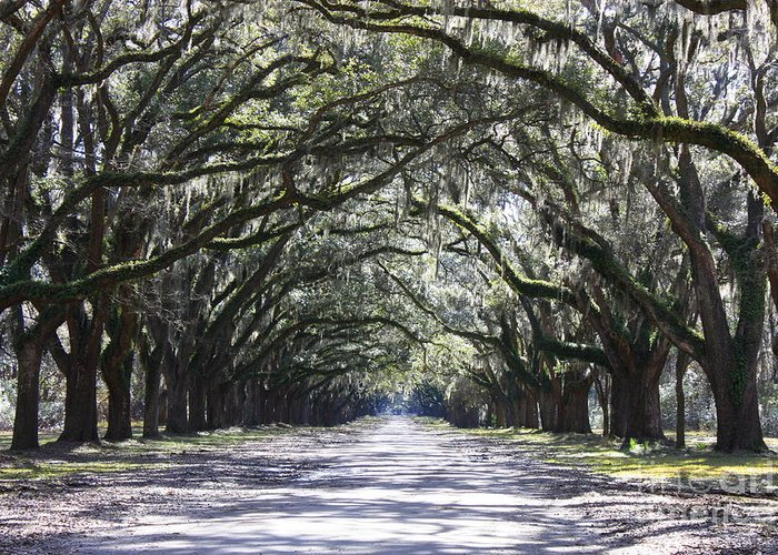 Landscape Greeting Card featuring the photograph Live Oak Lane In Savannah by Carol Groenen