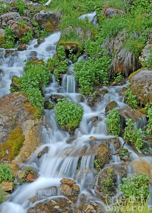 Logan Canyon Greeting Card featuring the photograph Logan Canyon Cascade by Dennis Hammer