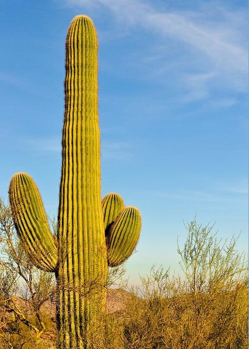 Arizona Greeting Card featuring the photograph Lone Cactus by Tom Dowd