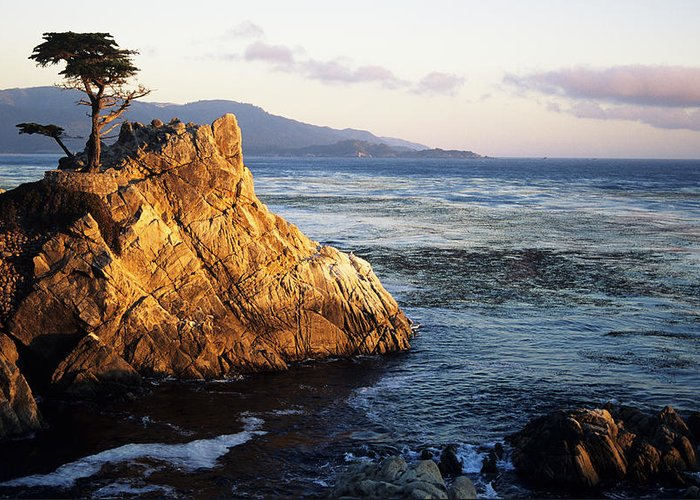 Afternoon Greeting Card featuring the photograph Lone Cypress Tree by Michael Howell - Printscapes