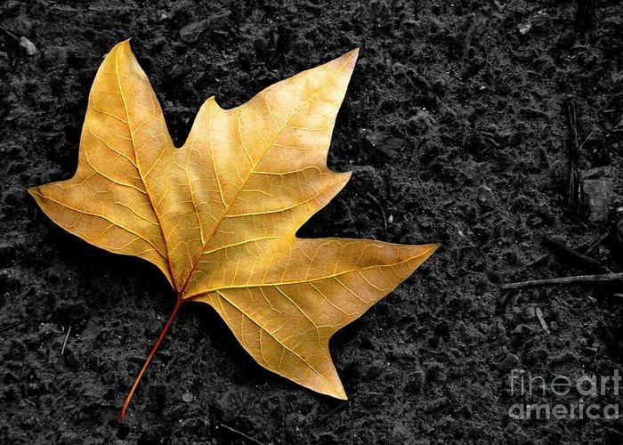 Asphalt Greeting Card featuring the photograph Lone Leaf by Carlos Caetano