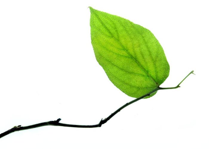 Leaf Greeting Cards