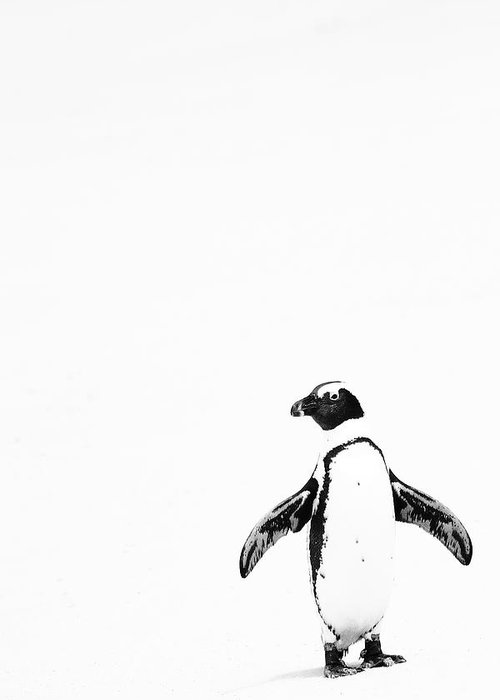 Penguin Greeting Card featuring the photograph Lone Penguin by Victoria Hillman