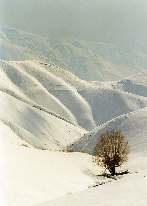 Mountain In Snow Greeting Card featuring the photograph Lone by Robert Shahbazi