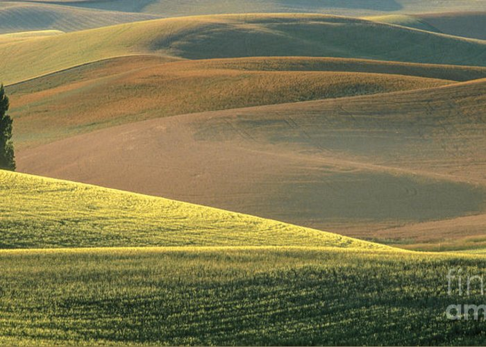 Landscape Greeting Card featuring the photograph Lone Tree In The Palouse by Sandra Bronstein
