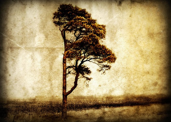 Tree Greeting Card featuring the photograph Lone Tree by Julie Hamilton