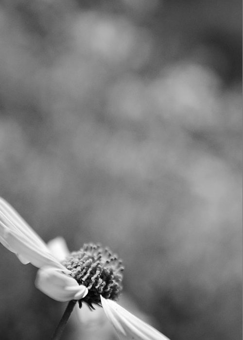 Black And White Greeting Card featuring the photograph Lone Wildflower Black And White by Jill Reger