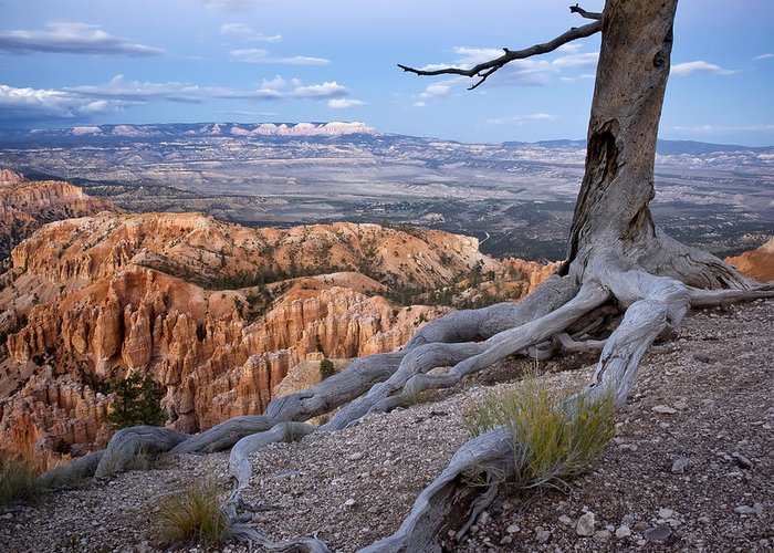 bryce Canyon Greeting Card featuring the photograph Loneliness by Mike Irwin
