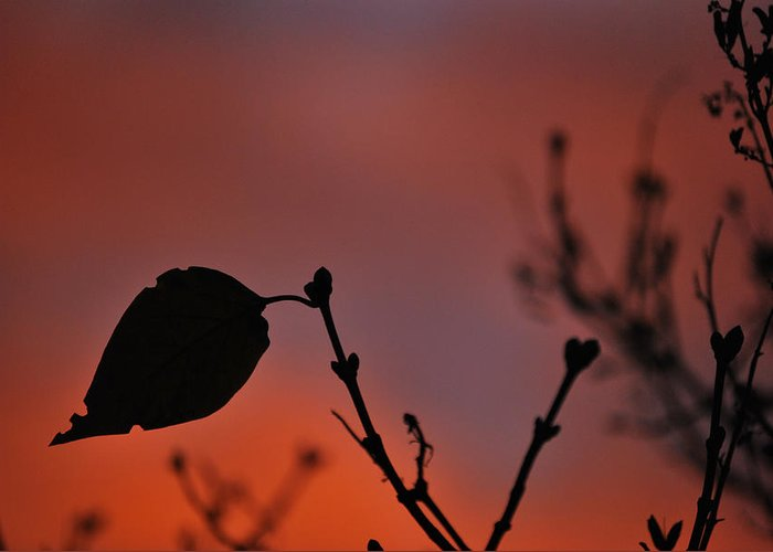 Leaf Greeting Card featuring the photograph Lonely Leaf by Matthew Fredricey