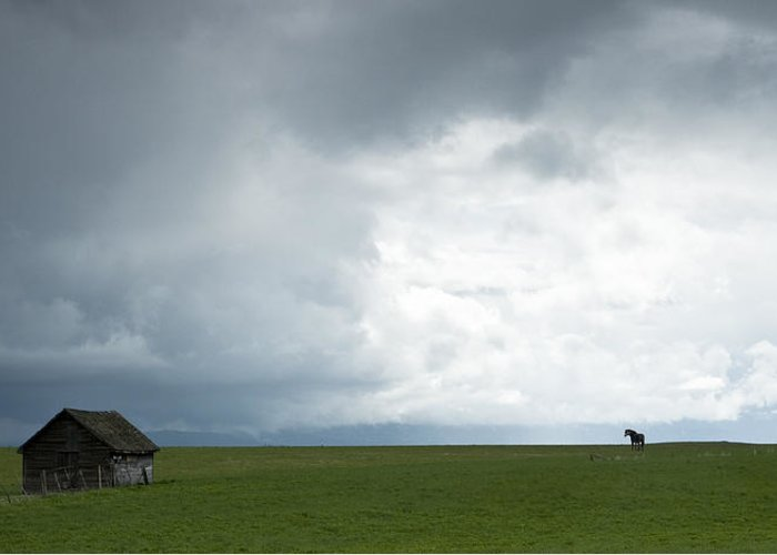 Rain Greeting Card featuring the photograph Lonely Mare by Peter Olsen