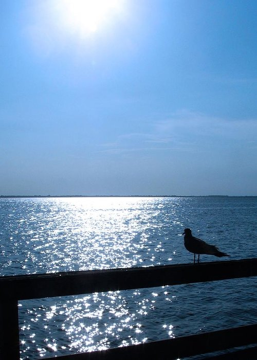 Seagull Greeting Card featuring the photograph Lonely Seagull by Dave Chafin