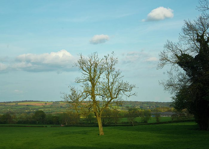 Cotswold Greeting Card featuring the photograph Lonely Tree Cotswold England by Douglas Barnett