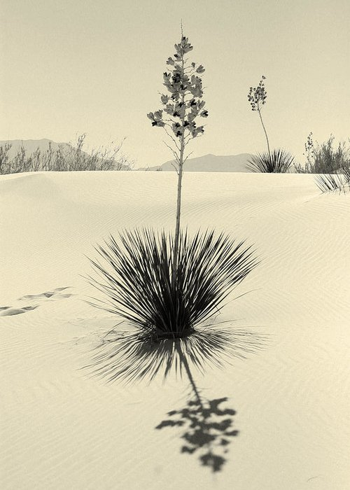White Sands National Monument Greeting Card featuring the photograph Long Shadows by Brian M Lumley