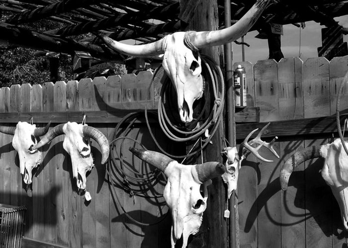 Southwest Greeting Card featuring the photograph Longhorn Skulls by Kathleen Stephens
